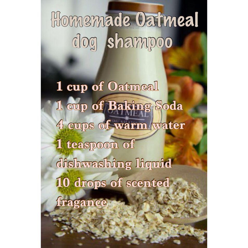 Homade Oatmeal Dogs Shampoo Oatmeal Dog Shampoo Dog Shampoo Diy Dog Shampoo