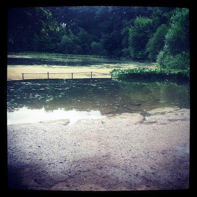 """""""dog beach"""", Prospect Park."""