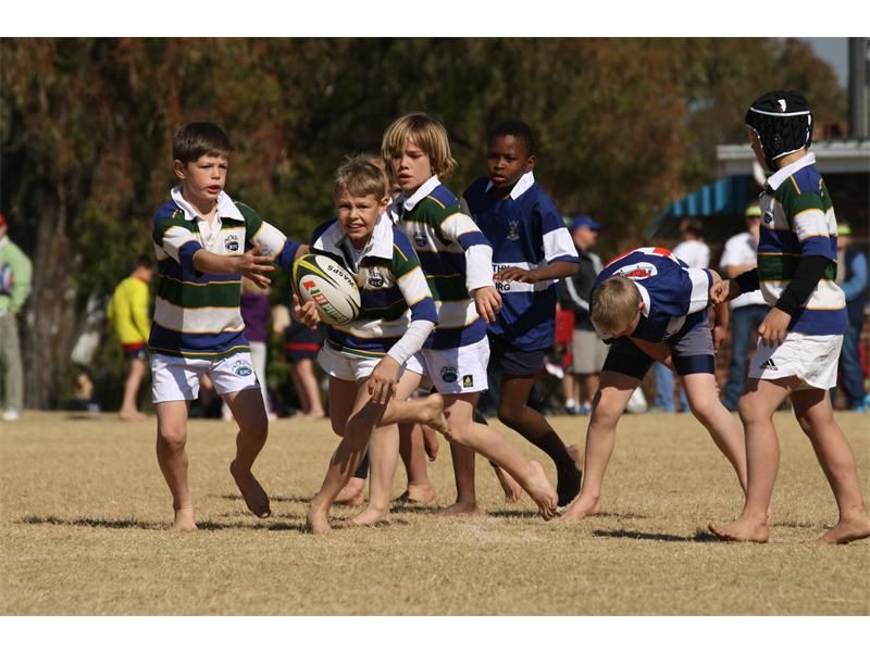 Pin On Rugby Lions Transvaal Rugby Union 1889