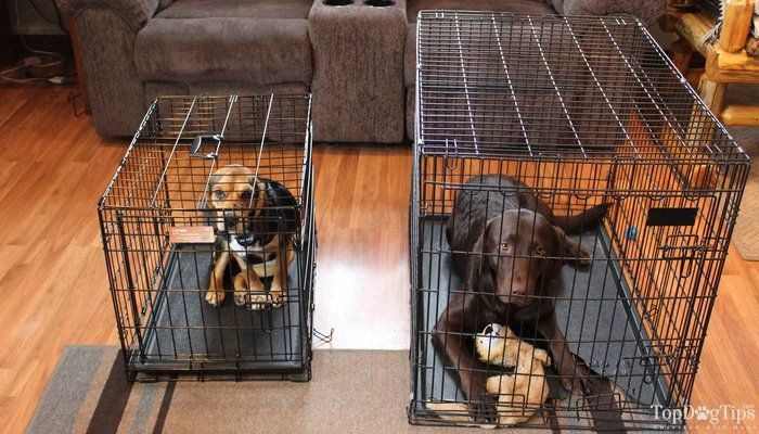 Dog Crate Sizes How To Size A Dog Crate For A Perfect Fit Dog