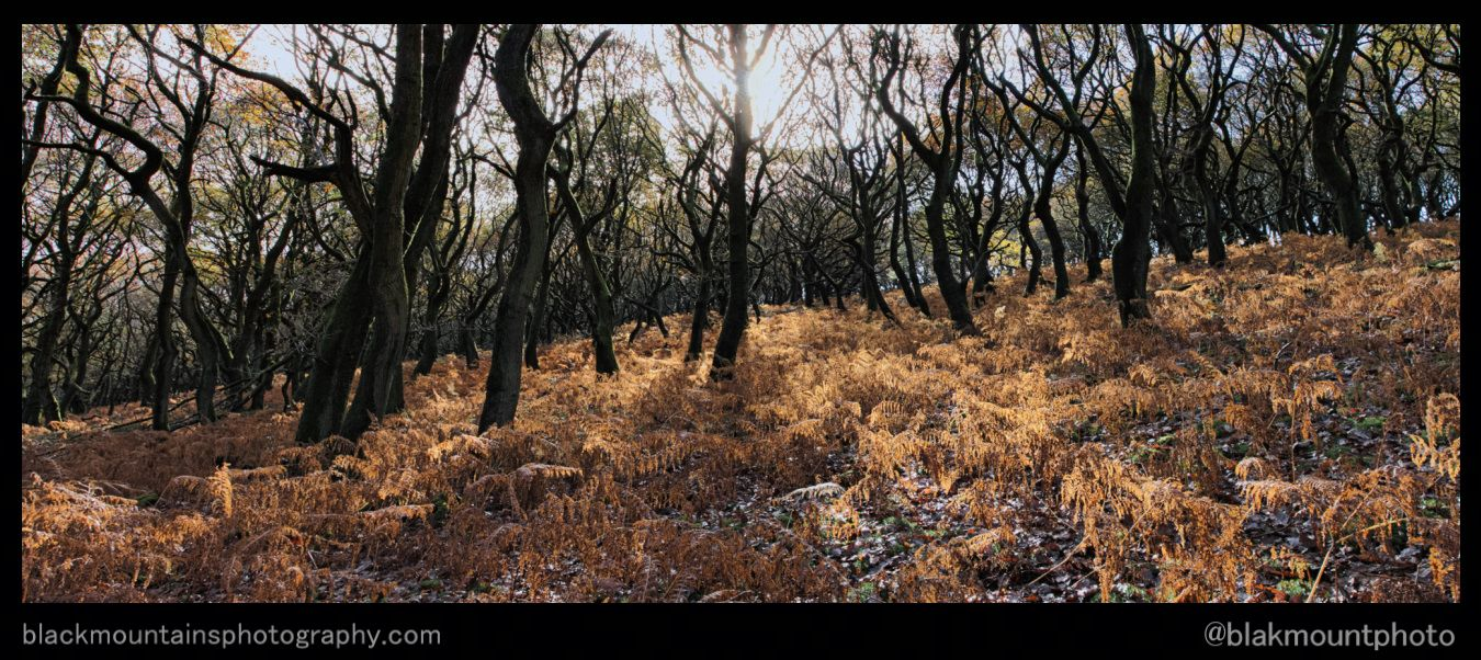 breconbeacons,brecon_beacons,blakmountphoto,woods,woodland,autumn,golden,leaves,pen-y-fan,