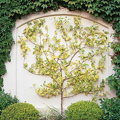 How To Make A Wire Espalier For A Garden Wall Garden Landscape