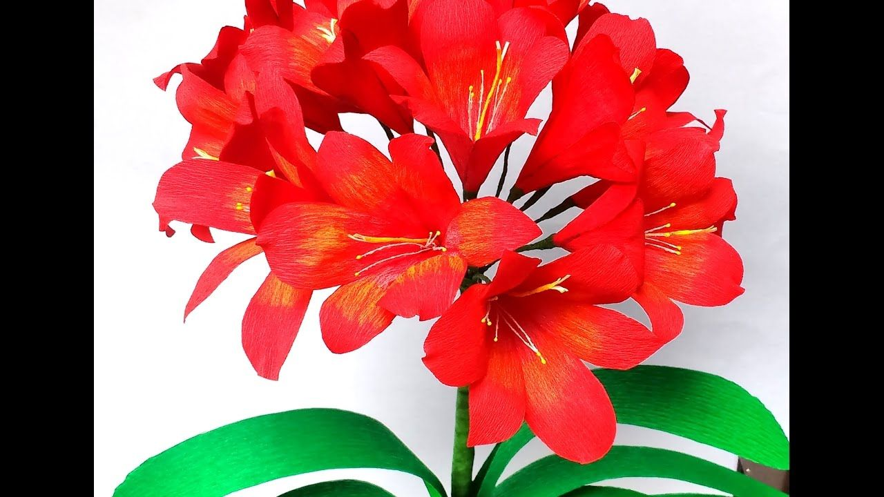 Paper Flowers Clivia  Natal Lily flower    Flores  Flowers