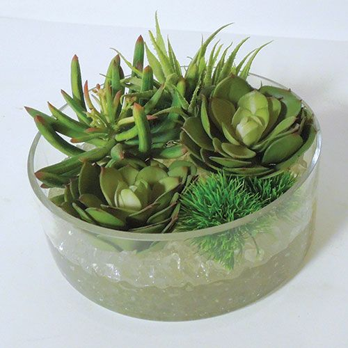 Beautiful succulents to warm up your house.