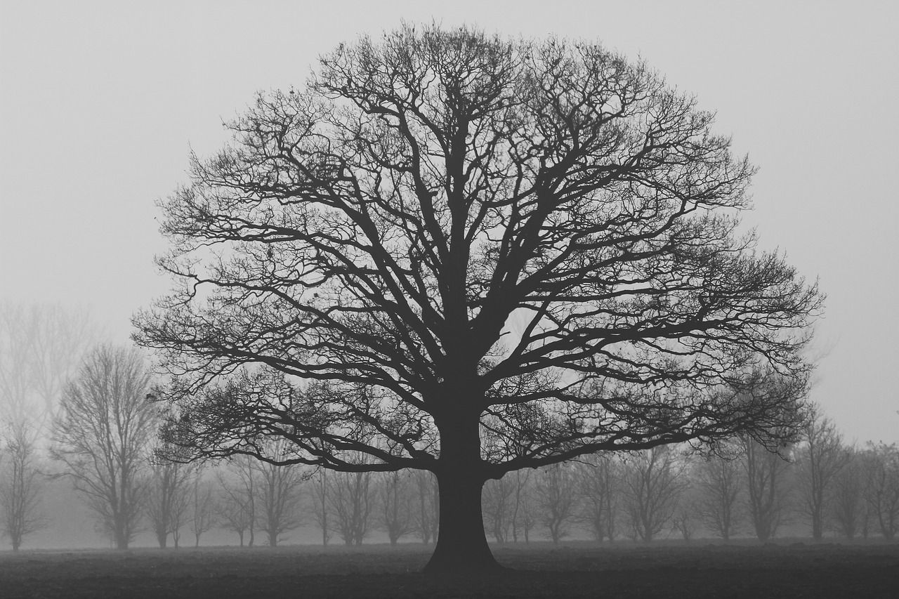Ethereal landscapes nature photography by donna geissler - Fog Solitaire Tree Autumn Nature Flat Land