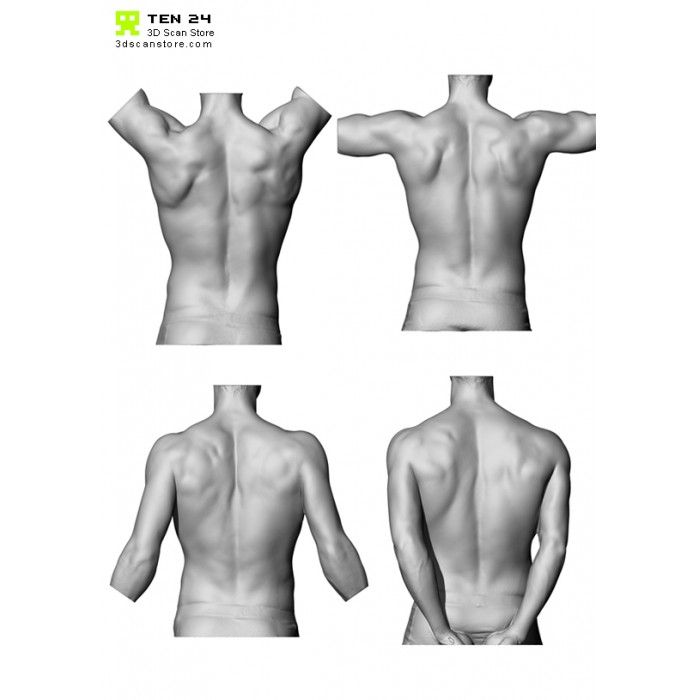 Male Torso Scan Bundle Body Anatomy Male Torso Anatomy Poses
