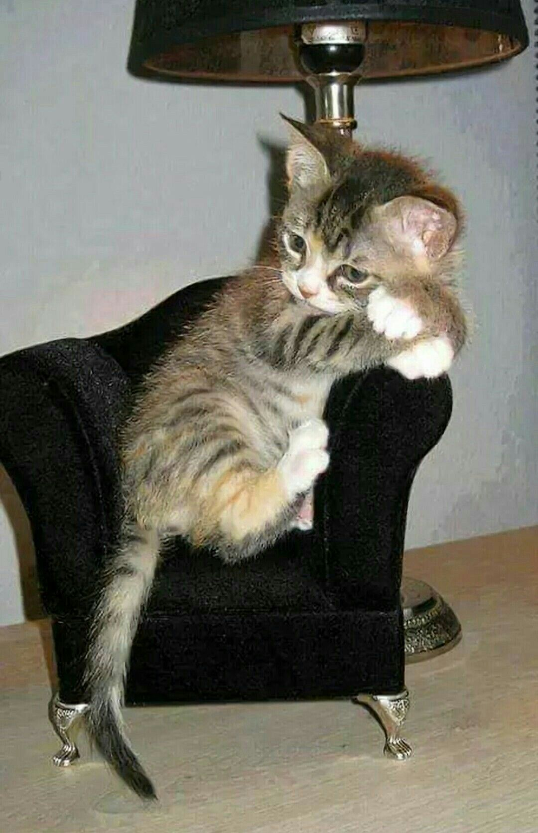 I am feeling a big lonely Kittens cutest, Cats and