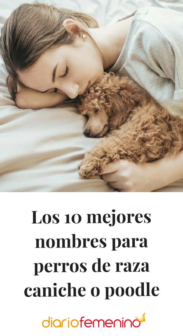 Los 10 Mejores Nombres Para Perros De Raza Caniche O Poodle Nombres Para Perros Caniches Nombres Para Cachorros Nombres De Perros