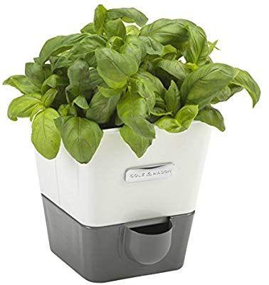 Amazon Com Cole Mason Self Watering Indoor Herb Garden 640 x 480