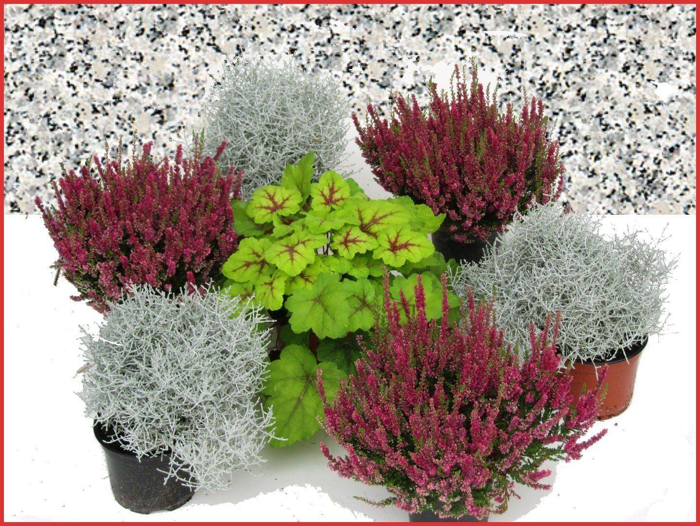 Blumen Für Garten Winterhart Von Unseren Redaktionsteams
