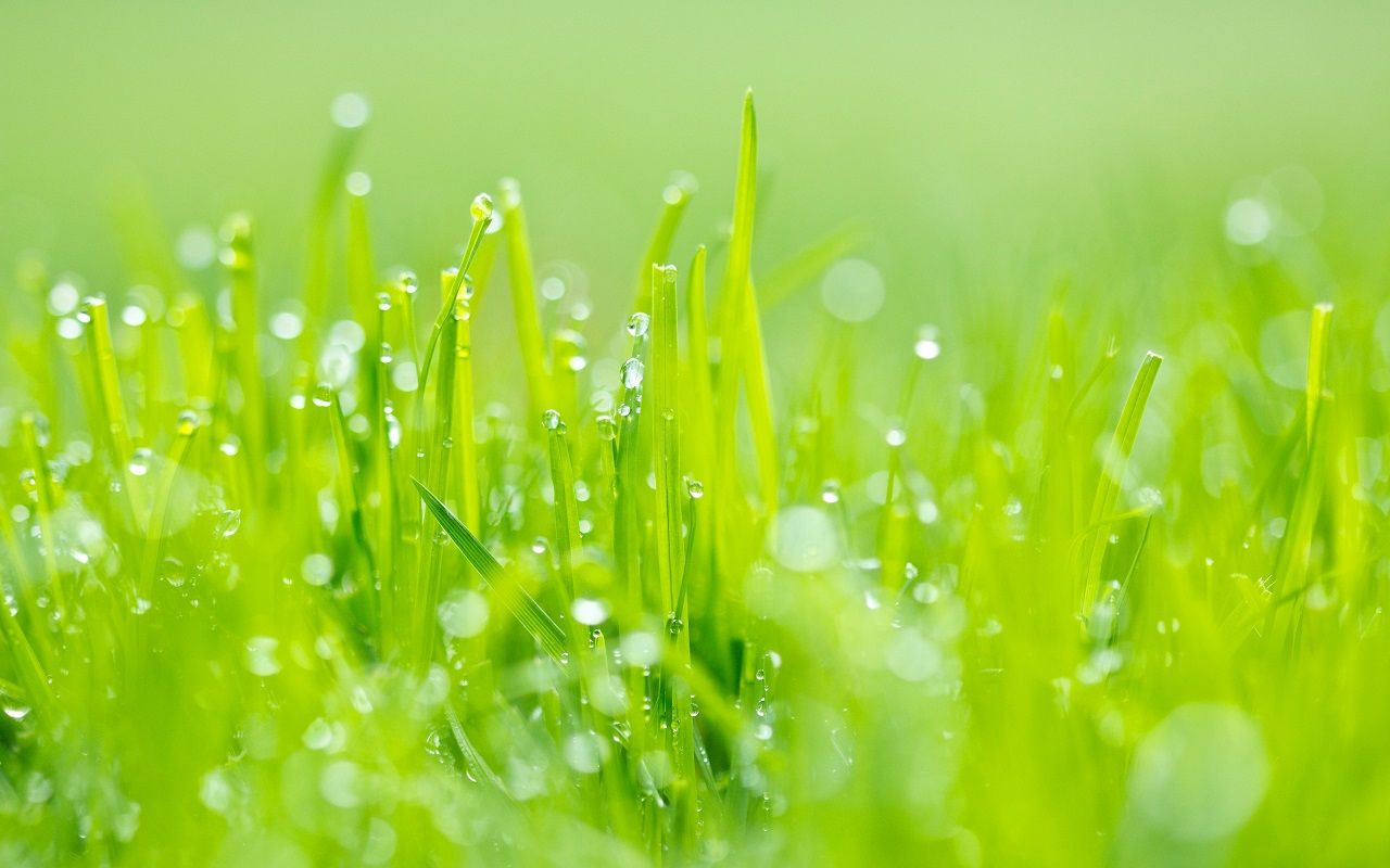 green grass wallpapers images photos pictures pics grass wallpaper nature wallpaper bokeh wallpaper green grass wallpapers images photos