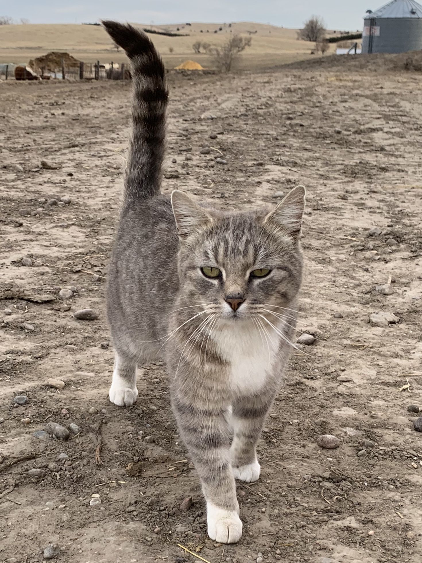 Farm And Ranch Cats Cats Kittens Dog Cat