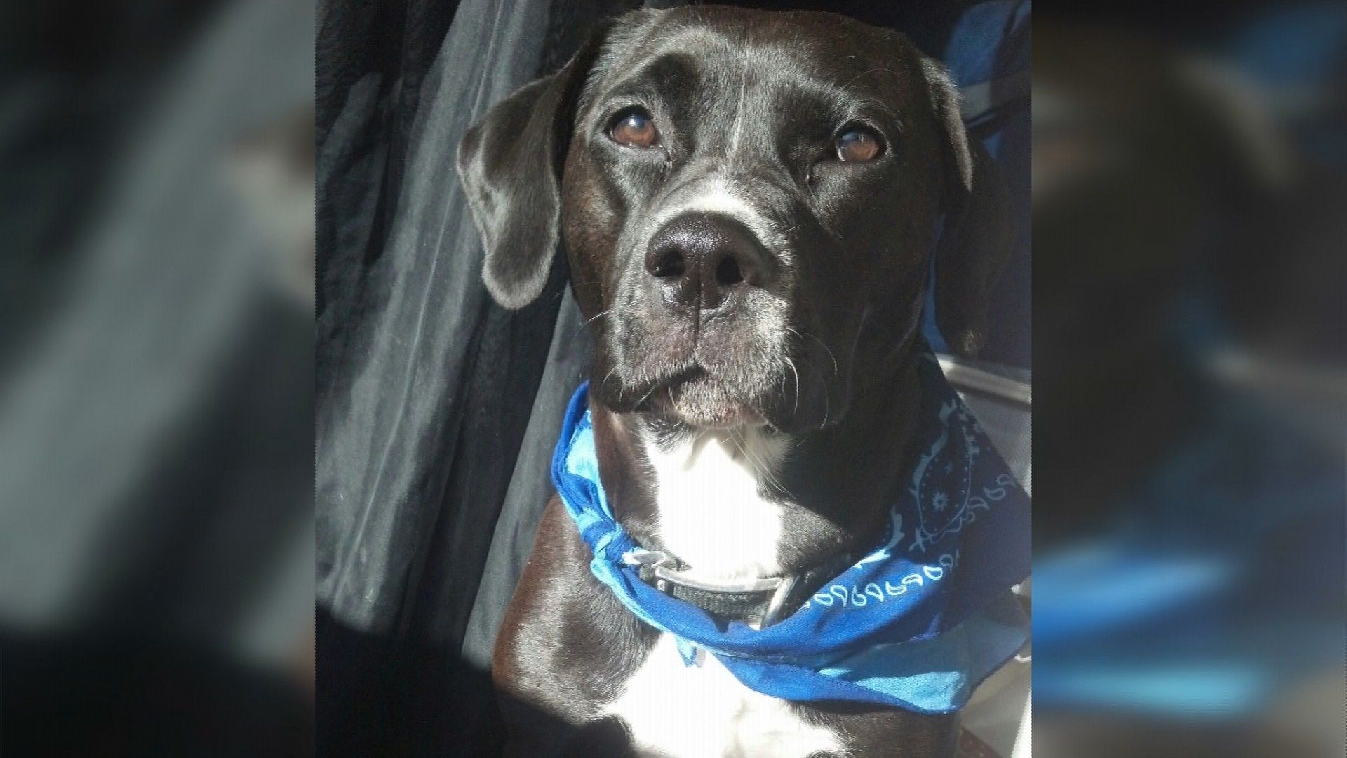 Family Outraged After Boise Police Officer Shoots And Kills Dog