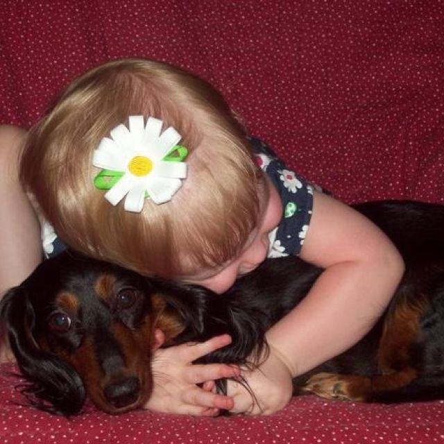 Big Hugs Dachshund Love Dachshund I Love Dogs