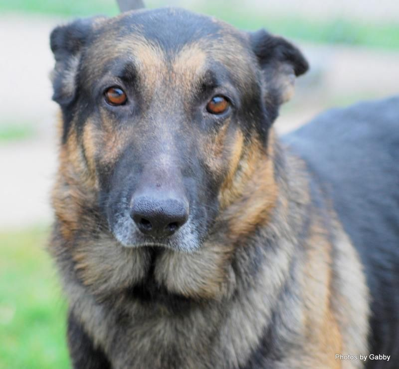 Adopt Max On Animal Welfare League Dog Adoption Animal Shelter