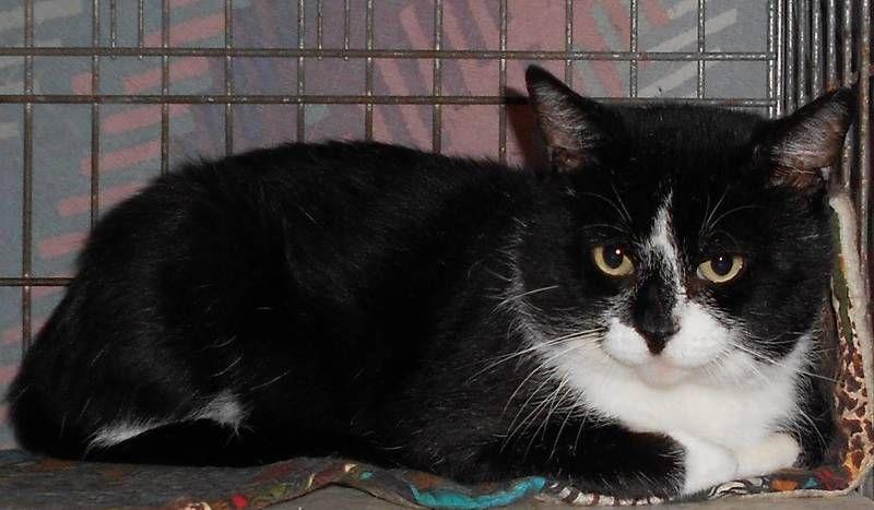 Adopt Willis on Petfinder Pet adoption, Adoption, Animals