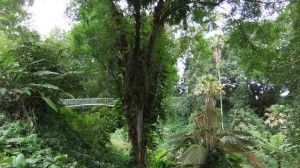 Excellent Pic Botanical Gardens oahu Strategies Vince and also I actually commemorated each of our 4 twelve months birthday by means of paying your day at the...  #Botanical #Excellent #Gardens