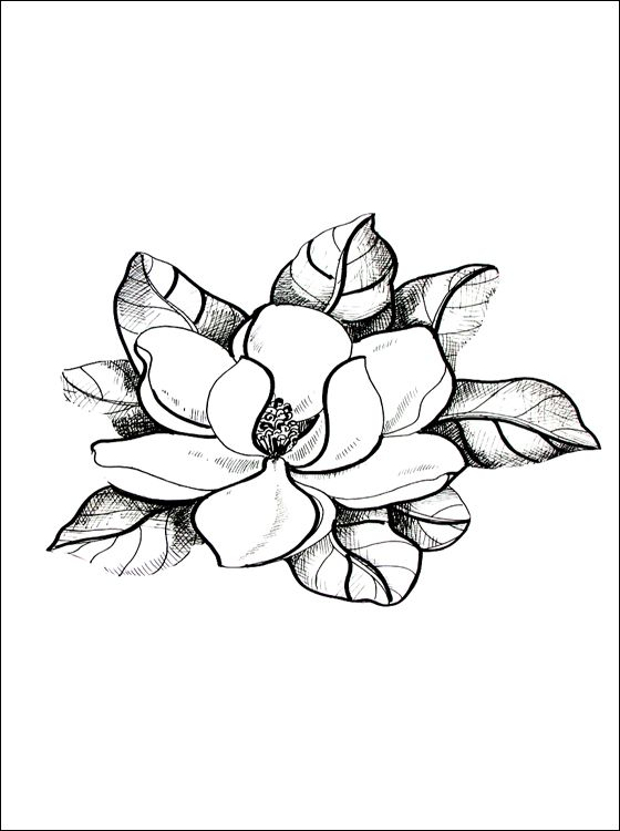 Magnolia Coloring Page Coloring Pages Flower Drawing Coloring Pages Drawings