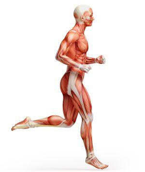 mi segít elveszíteni a has alsó zsírját zsírégetés fokozza az anyagcserét