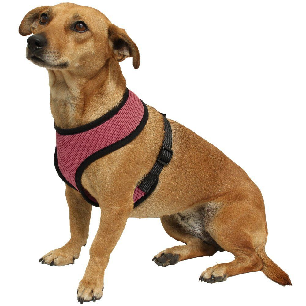 Get 35 Off When You Purchase Kavsy Best Soft Mesh Harness To Walk