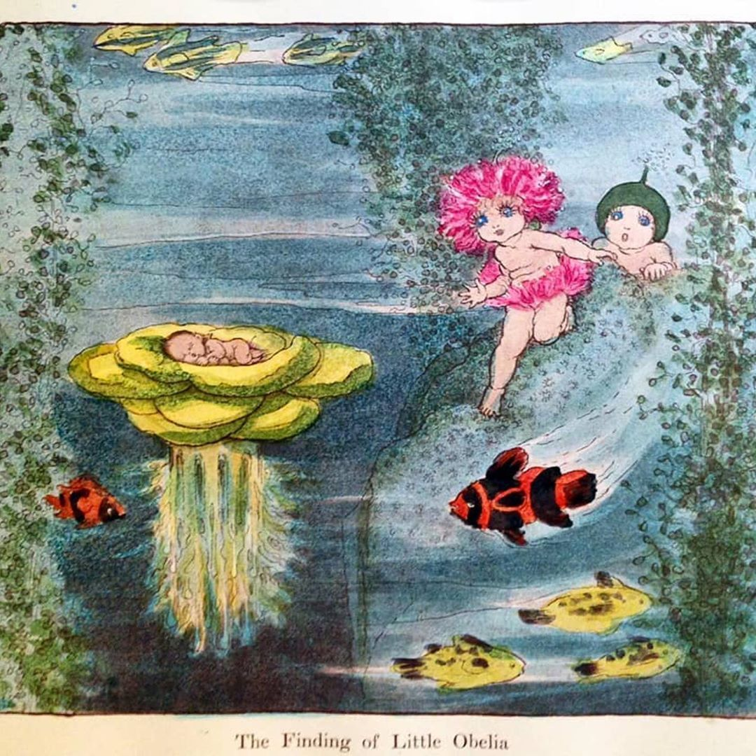 The Finding Of Little Obelia By May Gibbs