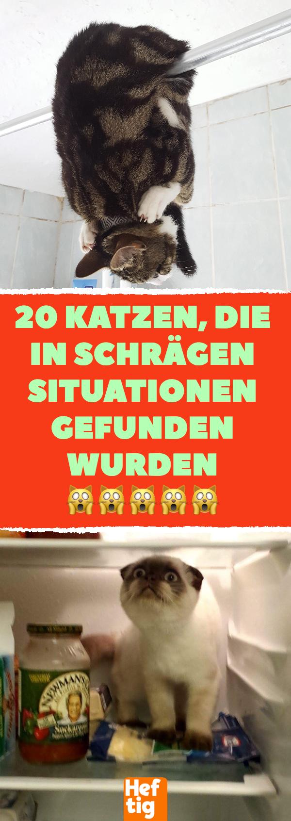 Photo of 20 Katzen in seltsamen Situationen gefunden. #cat #cats #photos # …