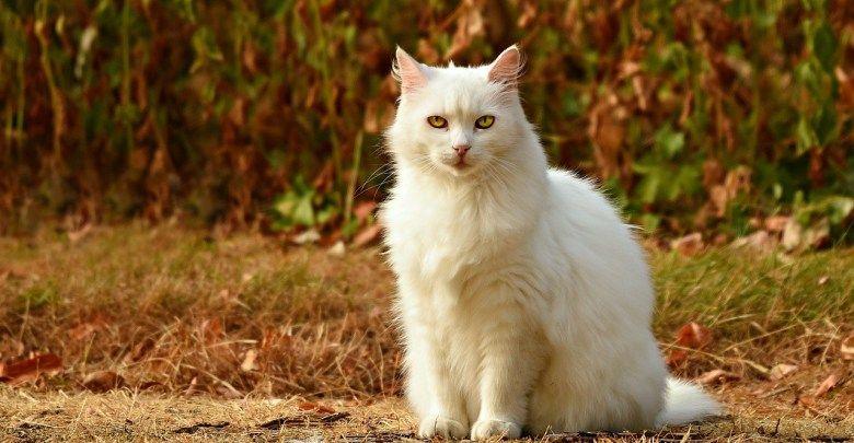 اسماء قطط بنات 2019 اسماء قطط اناث جديدة وكيوت Pets Cute Cats Photos Cats