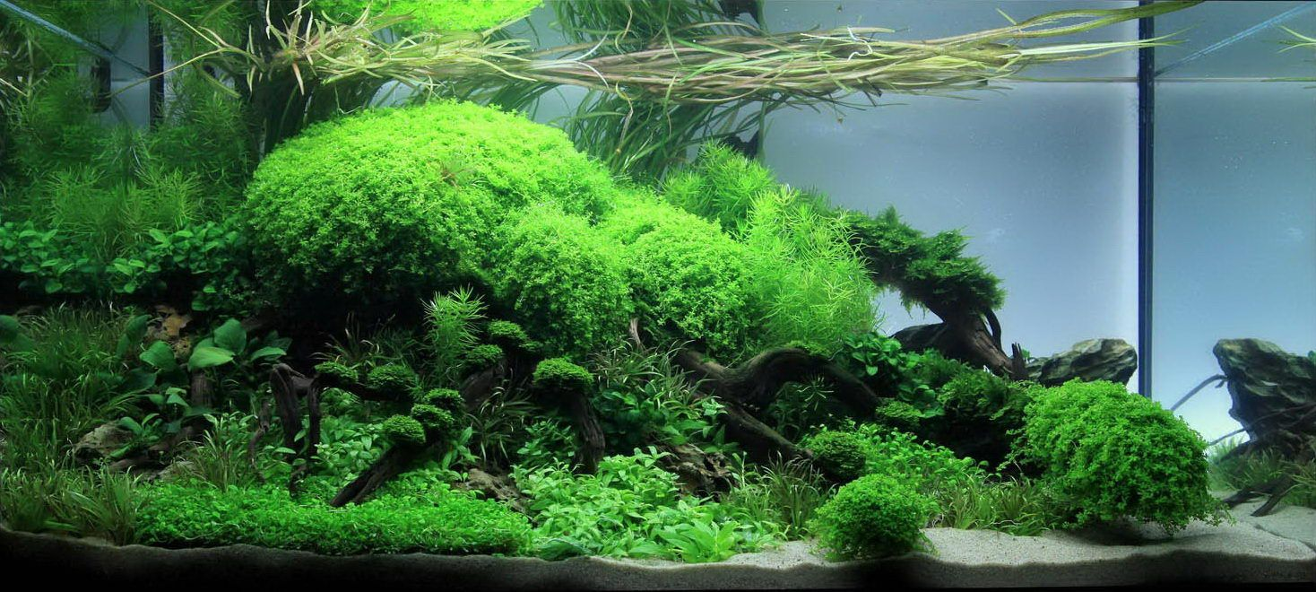 aquascaping planted aquarium aquascaping planted aquarium 2011 aquarium pinterest. Black Bedroom Furniture Sets. Home Design Ideas