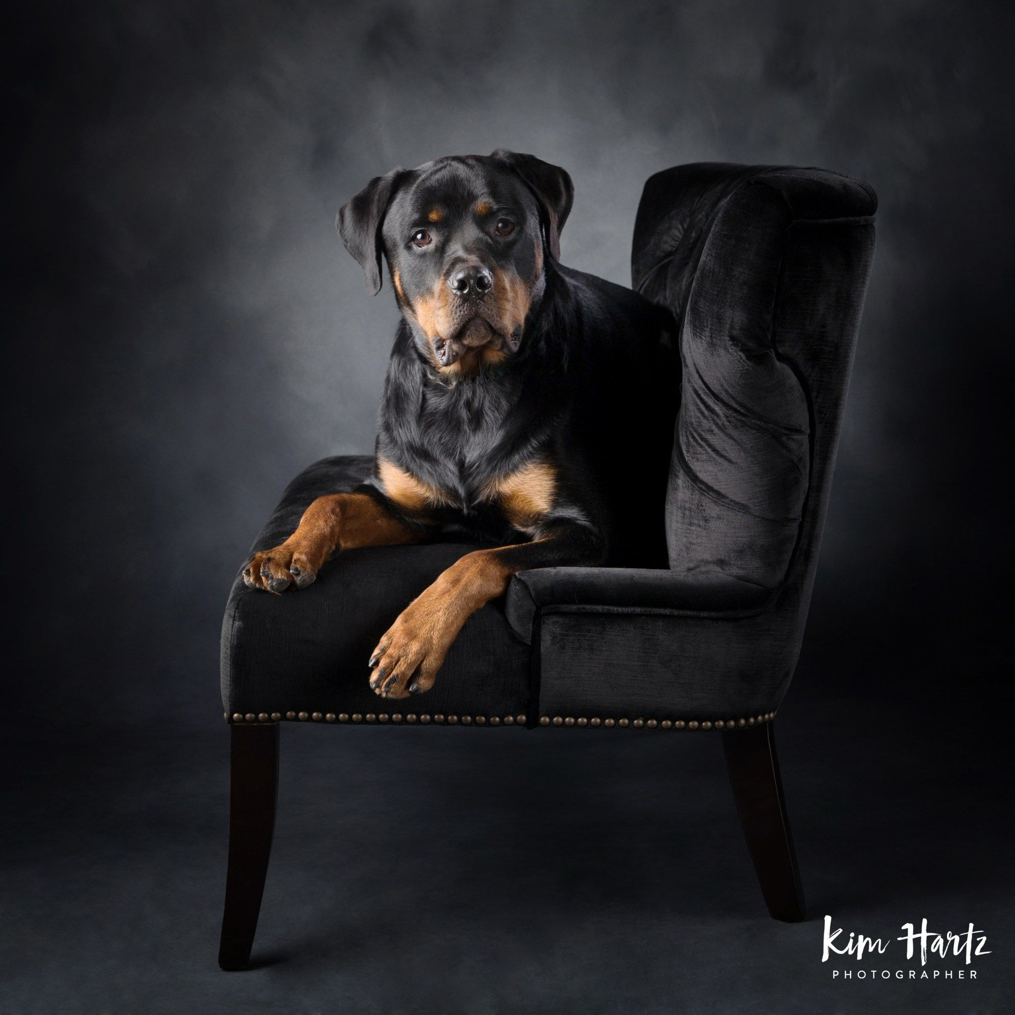 My Top Tips For Capturing Great Expressions With Pets Dog Photography Rottweiler Puppies Rottweiler Facts