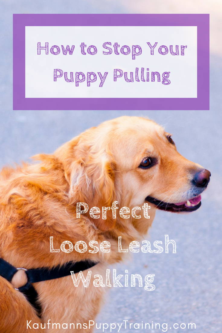 How To Stop Your Puppy Pulling Learn How To Train Your Dog To Walk Nicely On A Loose Leash Loose Leash Walking Dog Training Obedience Dog Training Techniques