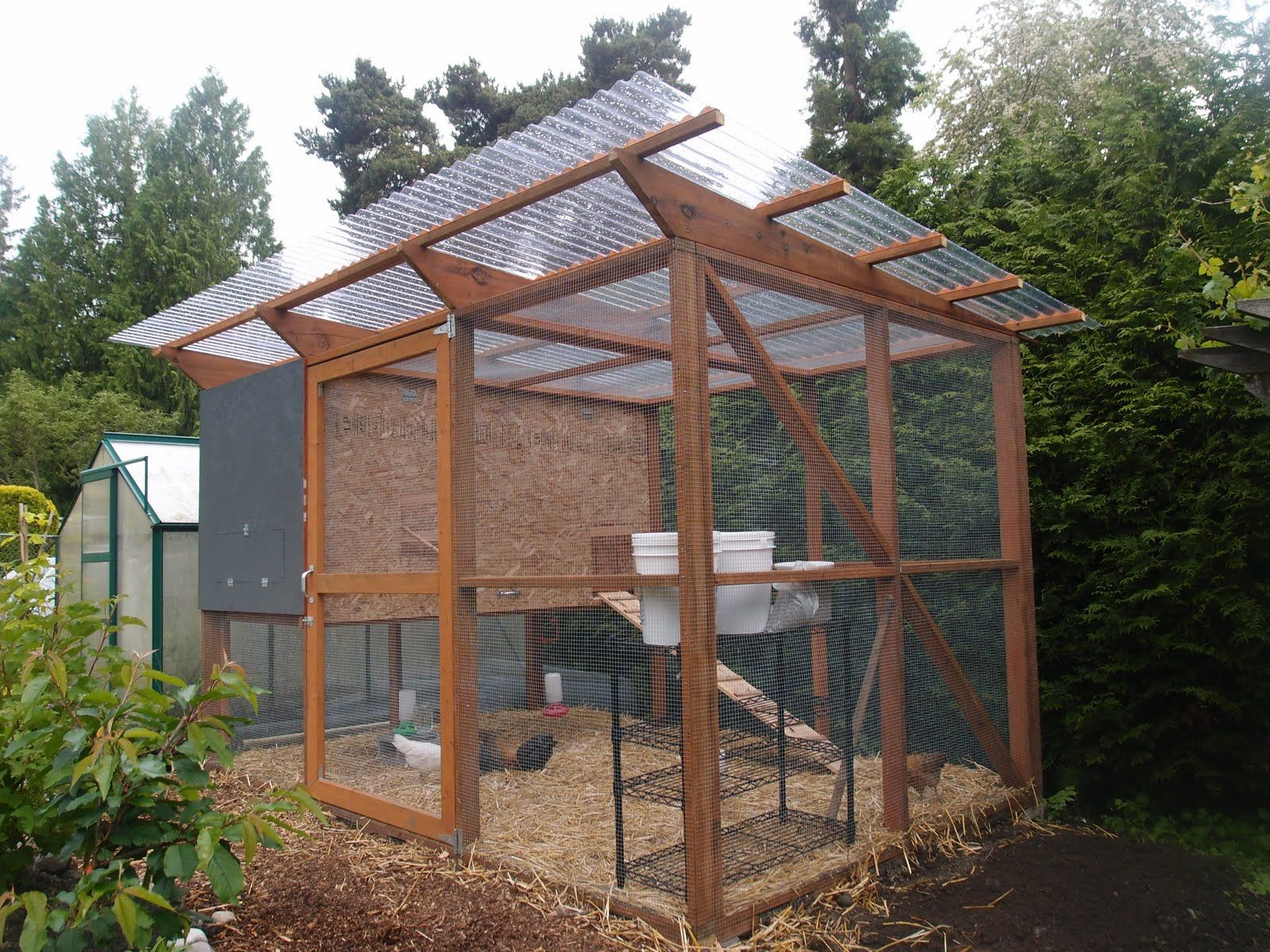 Clear Roof Chicken Coop Chickens And Other Poultry