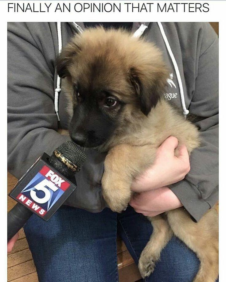 Top Funny Canine Adorable Dog - 4f08c4ed136a927e68db3dc8431cae60  2018_60904  .jpg