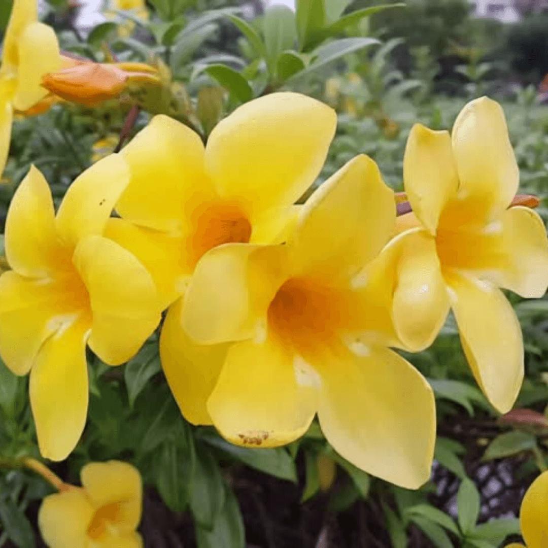 Anemone flower Spiritual Messages Fragile Elegance