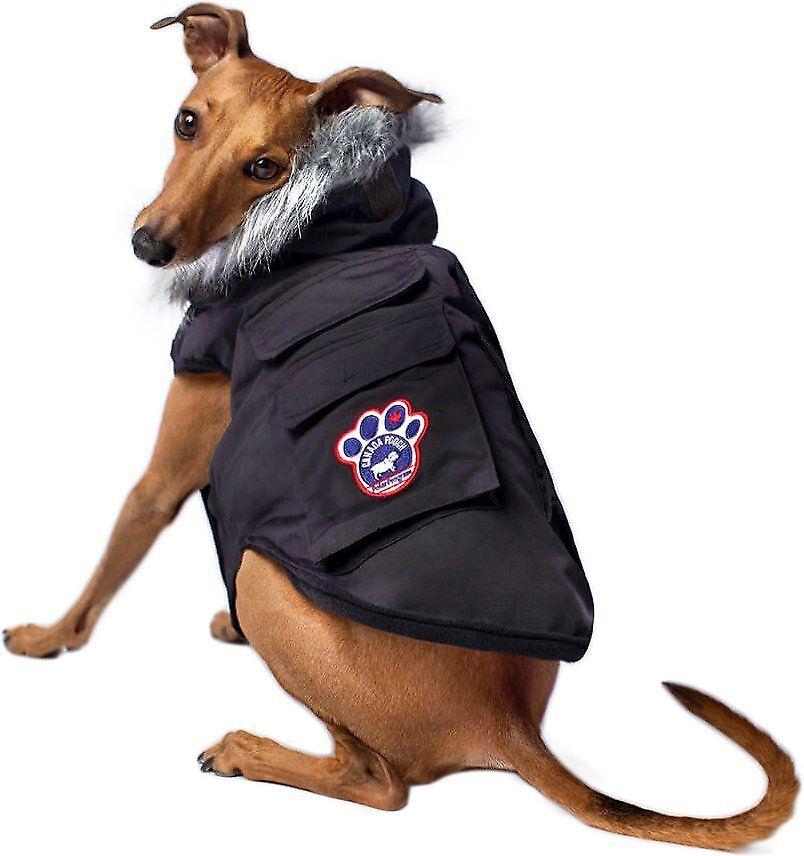 Canada Pooch Everest Explorer Premium Dog Jacket, Black, 8