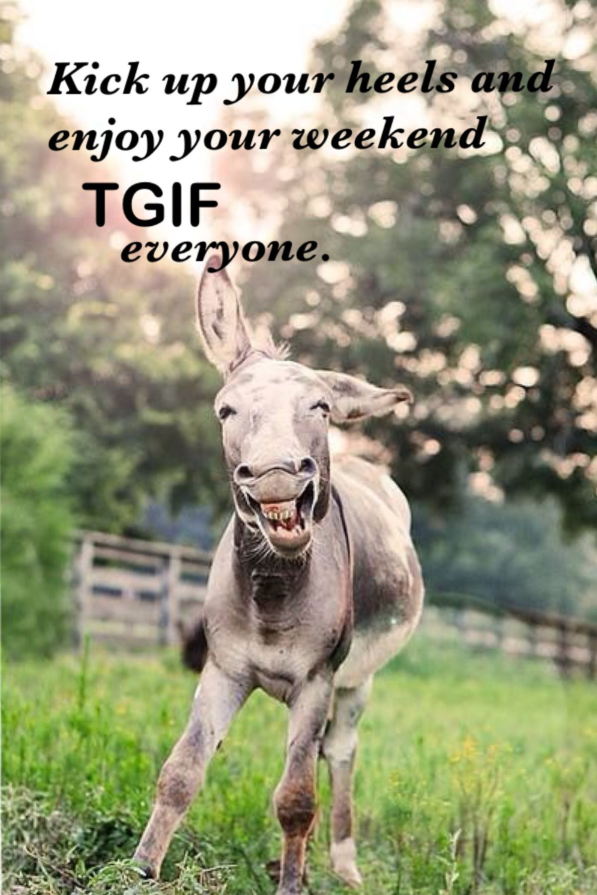 Good Morning TGIF | My Quotes of the day. ♥ | Pinterest ...