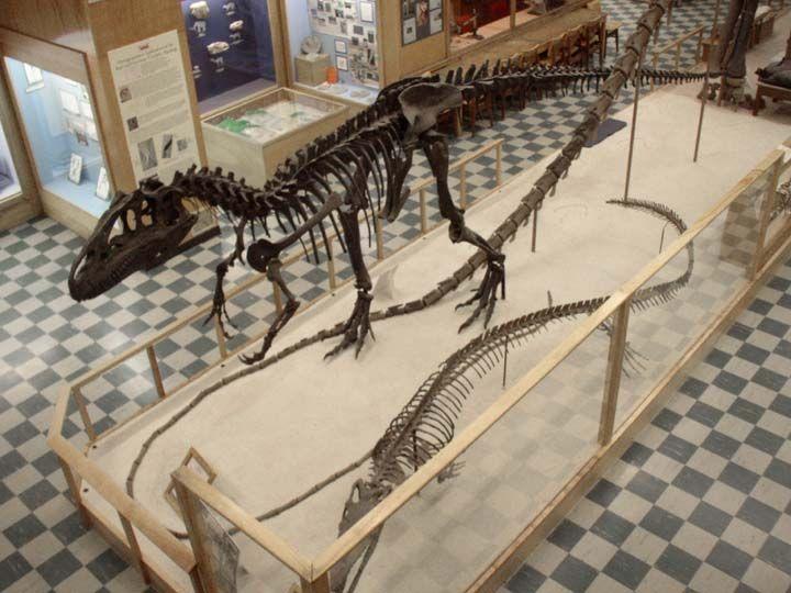 10+ Allosaurus foot information