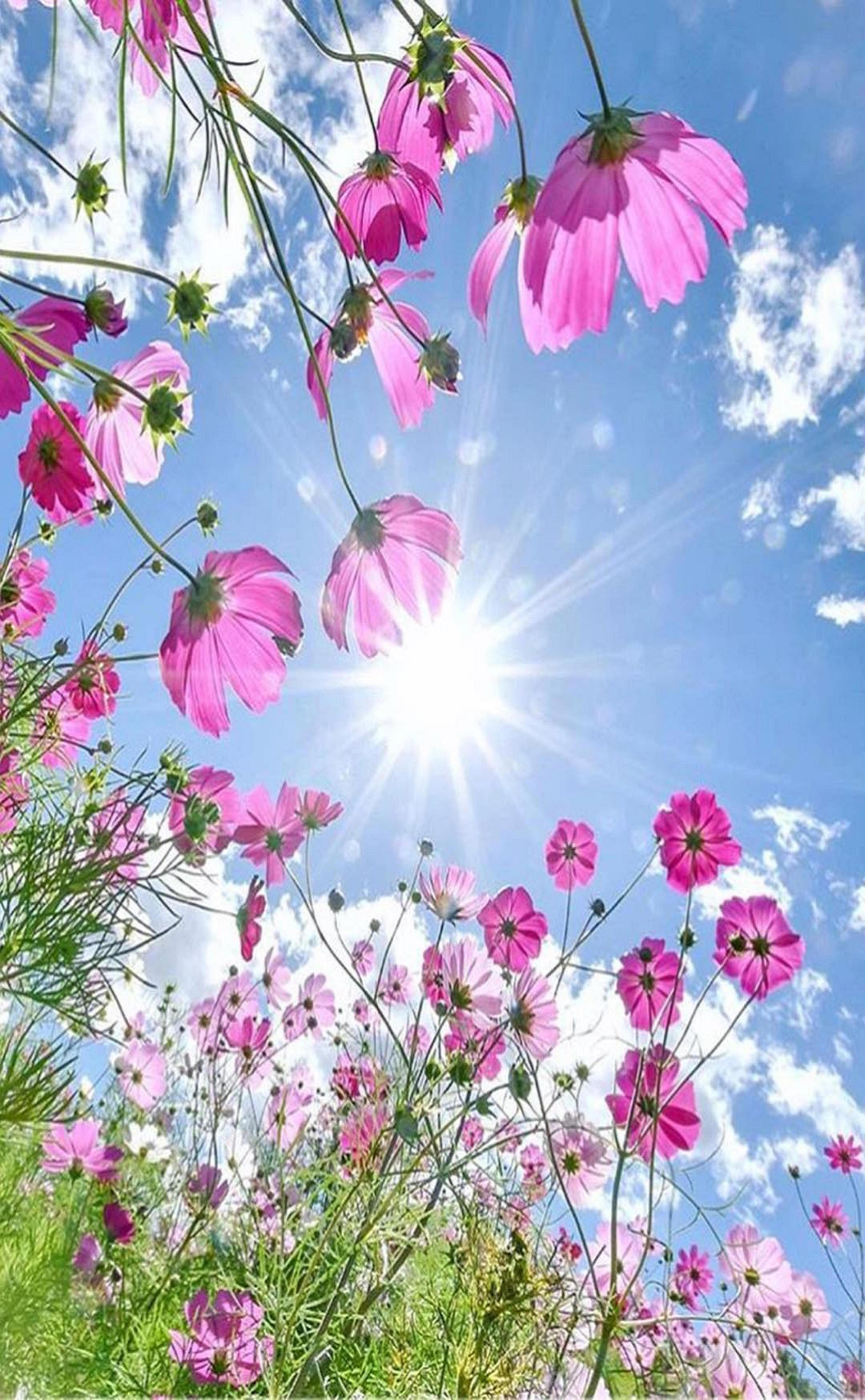 美しい自然の風景 おしゃれまとめの人気アイデア Pinterest Momo コスモス 花 美しい花 きれいな花