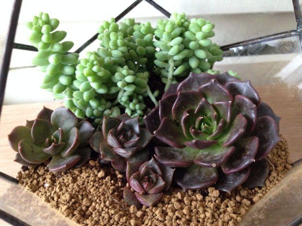 C mo decorar con plantas suculentas jardin y interiores - Plantas para decorar interiores ...