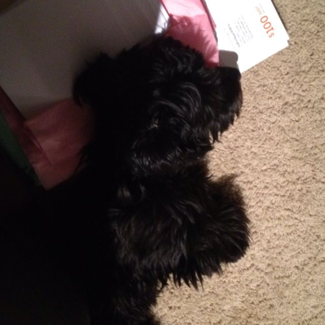 Napping on envelopes!
