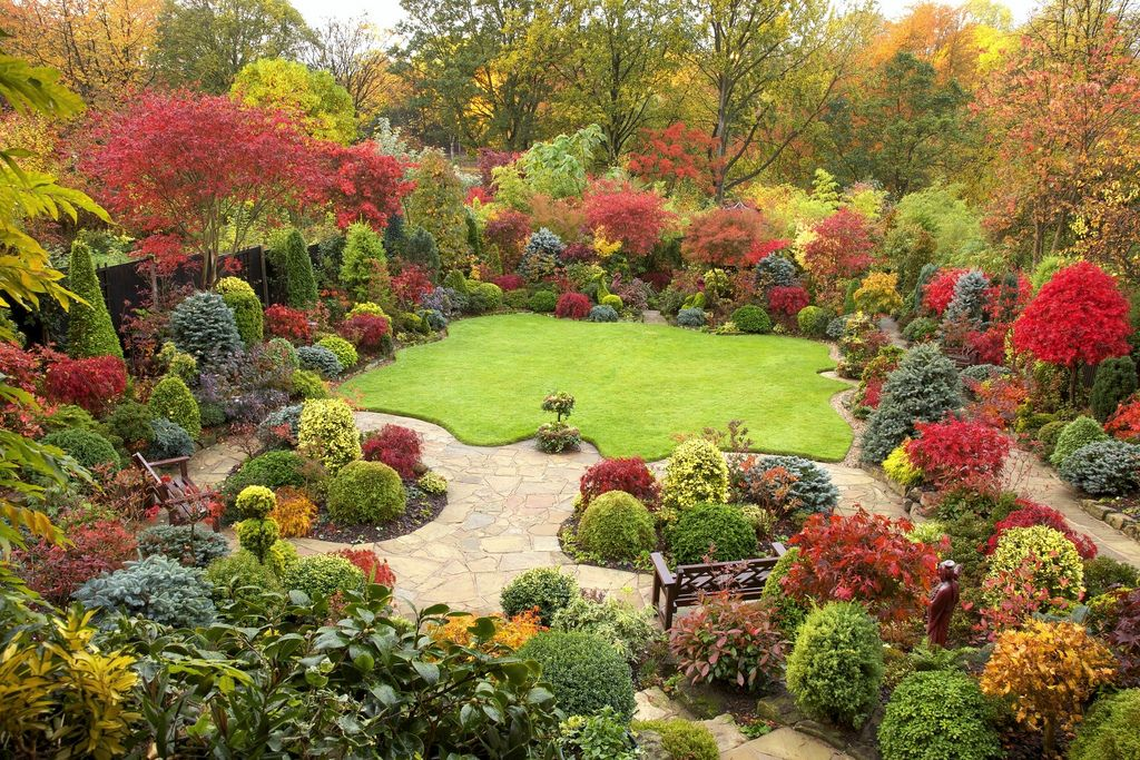 Autumn Garden Beautiful Acer Colours November 1St 400 x 300