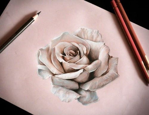 25 Beautiful Rose Drawings And Paintings For Your Inspiration Roses Drawing White Rose Tattoos Rose Drawing