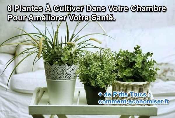 6 Plantes A Faire Pousser Dans Votre Chambre Pour Ameliorer Votre