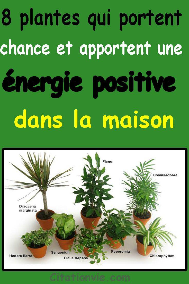 Voici 8 Plantes Qui Portent Chance Et Apportent Une Energie