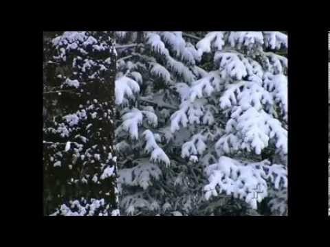 Planêta Terra - Sibéria - Rússia Selvagem