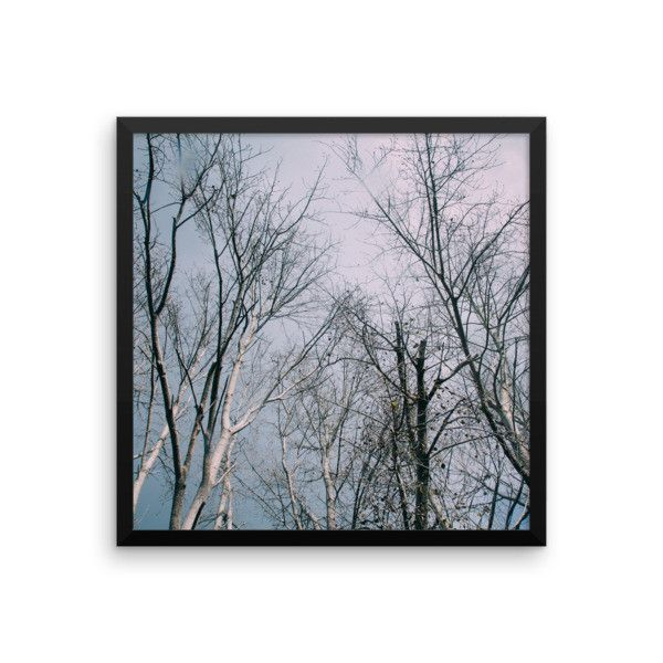Framed Poster - Autumn Trees