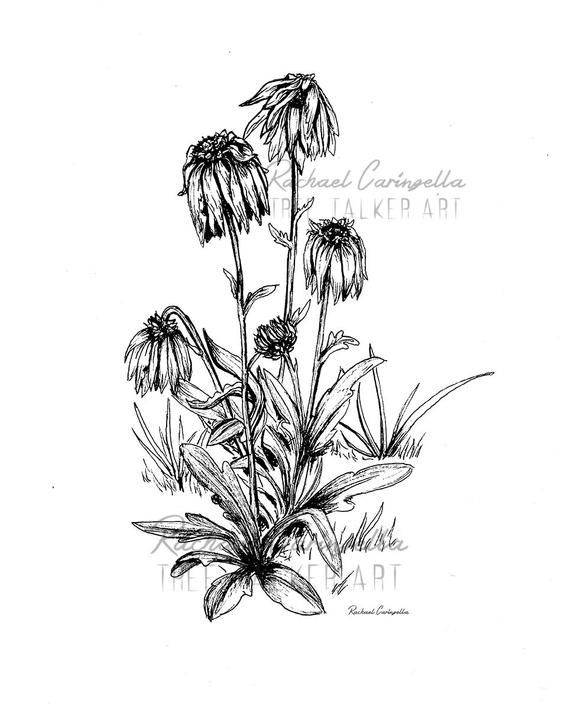 Dying Flowers Illustration Giclee Fine Art Print  Pen and   Etsy