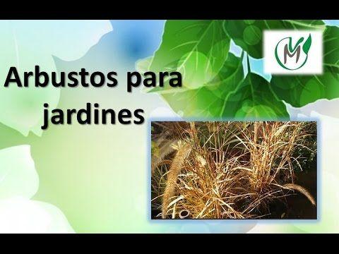 Arbustos para Jardines - Vivero Marra JARDIN 2 CUIDADOS PLANTAS