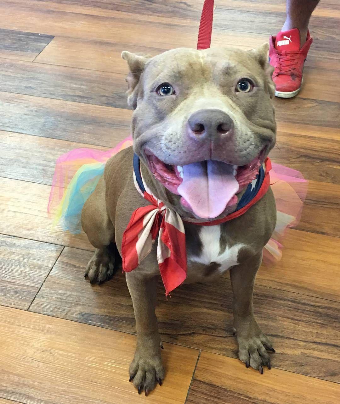 Cutecustomeralert Meika Cutecustomeralert From Pet Valu Glassboro Nj Stopped By To Pick Out A Tutu Pet Valu Pets Instagram Posts Cute