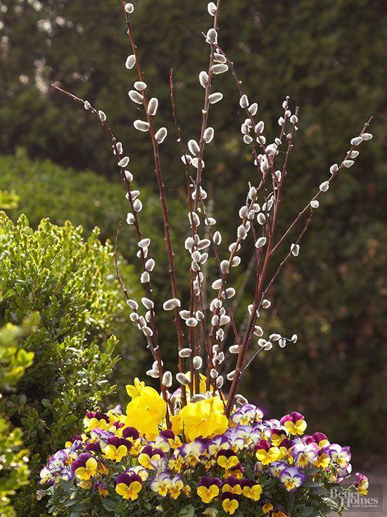 Natives with Year Round Interest Plants Gardens and Garden ideas