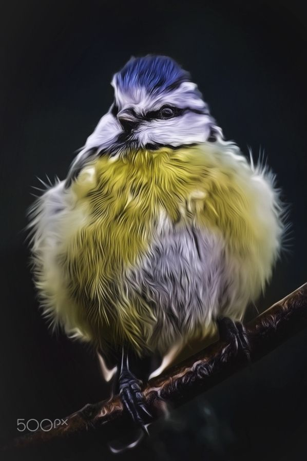 North German Bowl Tit - shot out of my window. maybe the title is not 100% correct !!!